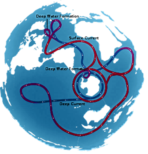 Global Thermohaline Circulation