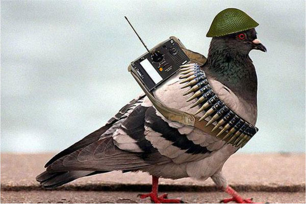 Pigeon post: Meet the birds with a backpack who deliver their ...